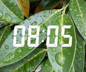 hours, plants, and rain image
