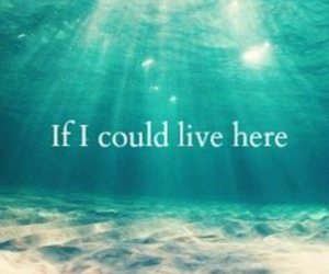sea, ocean, and live image
