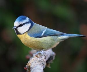 bird, blue, and birds image