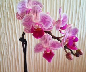 flower, flowers, and orchid image