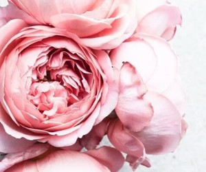 цветы, лето, and шик image