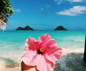 beach, pink, and flower image