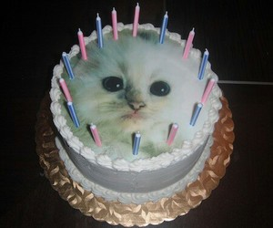 cake, cat, and grunge image