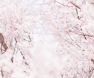 flowers, japan, and pink image