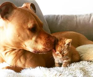 animals, pets, and cats image