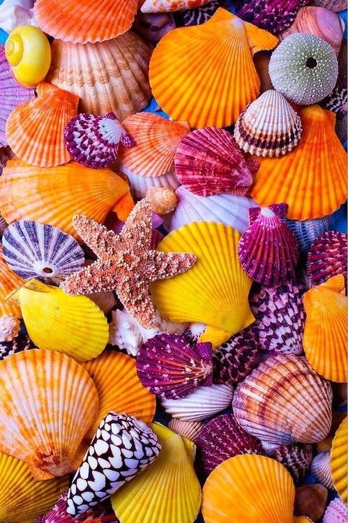shell, summer, and background image