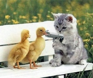 cat, duck, and kitten image