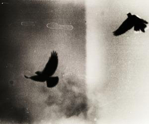 aesthetic, bird, and grunge image