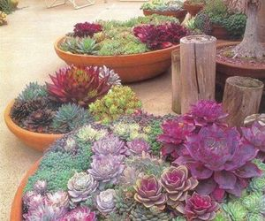 beautiful, gardening, and flowers image