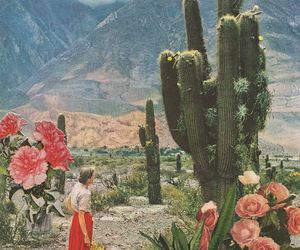 cactus, art, and flowers image