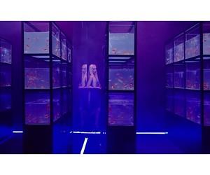 aesthetic, k-pop, and purple image