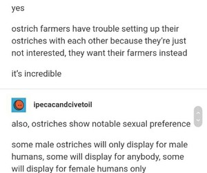 funny, ostrich, and tumblr image