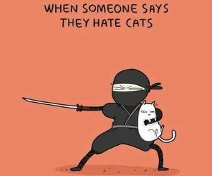 cat, funny, and ninja image