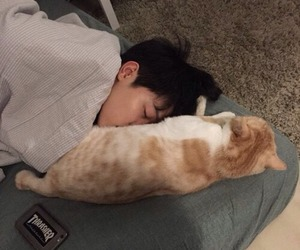 bts, jimin, and cat image