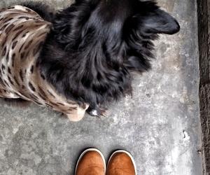 black, dog, and photography image