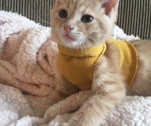 cat, animal, and yellow image