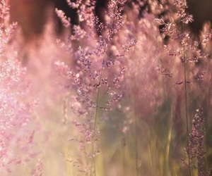 beautiful, pink, and summer image
