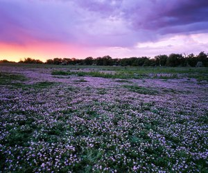 flowers, sunset, and field image