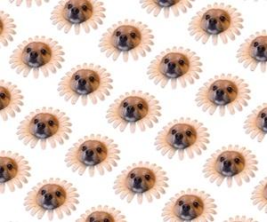 background, dog, and flower image