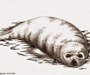 animals, art, and seal image
