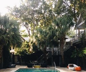 travel, palm, and pool image