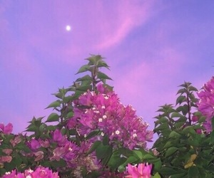 sky, flowers, and moon image