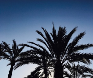 palm, tree, and spain image