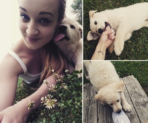 dog, lovely, and me image