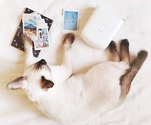 cat, instax, and pictures image