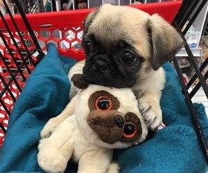 dog, puppy, and pug image