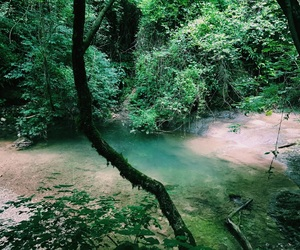 feed, green, and grunge image