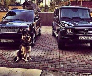 car, dog, and range rover image