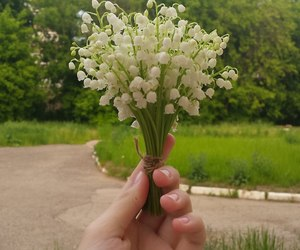 flowers, hand, and lily of the valley image