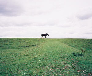 horse, nature, and green image