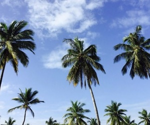 beach, palm trees, and pretty little things image