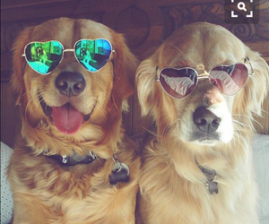 dog, animal, and sunglasses image