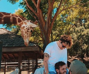 feeding, kianandjc, and giraffe image