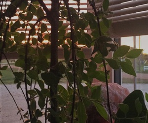 plants, sunset, and pretty image