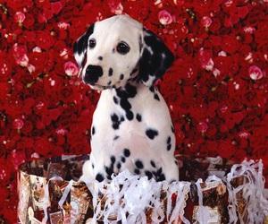 red, dog, and animal image