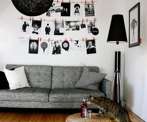 cat, decor, and living room image