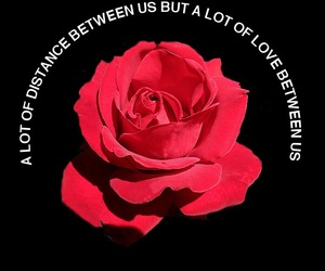 rose and quotes image