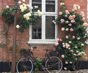 bike, hipster, and flowers image