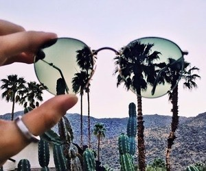 summer, cactus, and sunglasses image