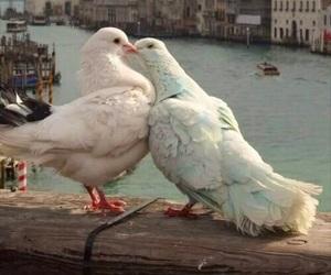 birds and bird love image