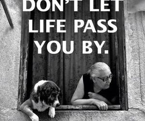 elderly, breathe, and dog image
