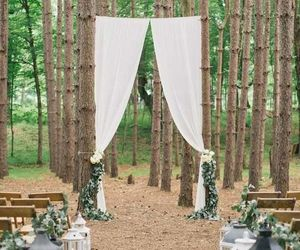 forest, wedding, and nature image