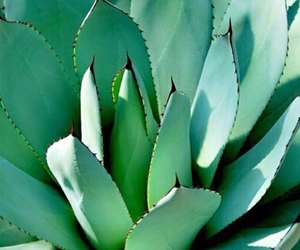 aesthetic, cactus, and leaf image