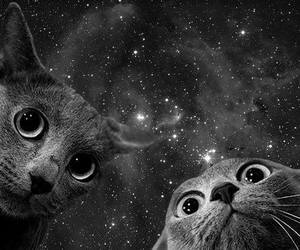 cat and space image