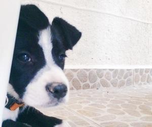 cachorrito image