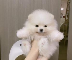 dog, white, and щенок image